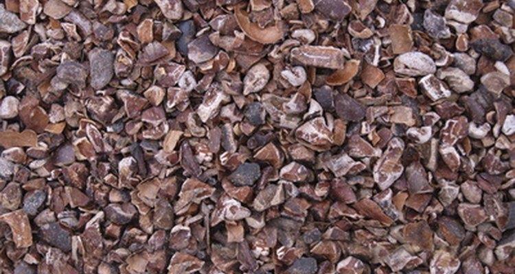 Los granos de cacao se pueden convertir en trocitos de cacao o chocolate.