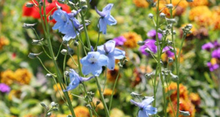 Las rocas volcánicas son una buena opción para los jardines con flores.