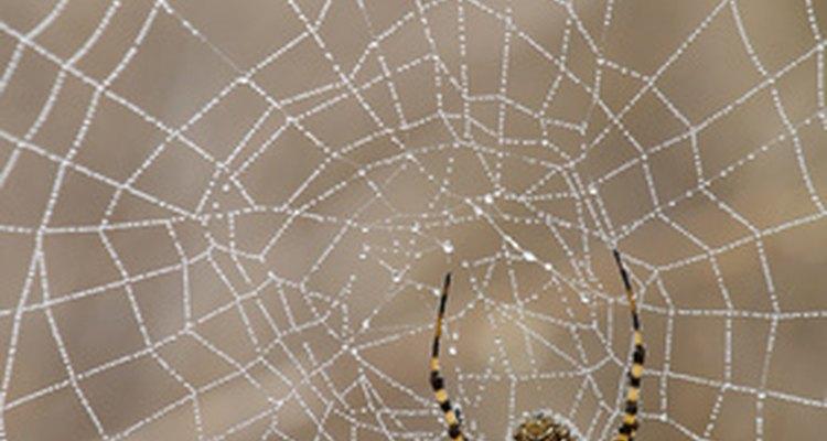 Apesar de as aranhas terem seus benefícios, você não precisa tê-las por perto sempre