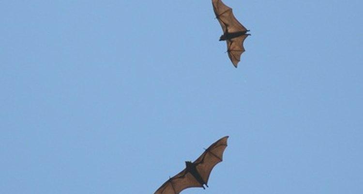 Podemos ayudar a mantener viva la población de murciélagos tomando varias precauciones.