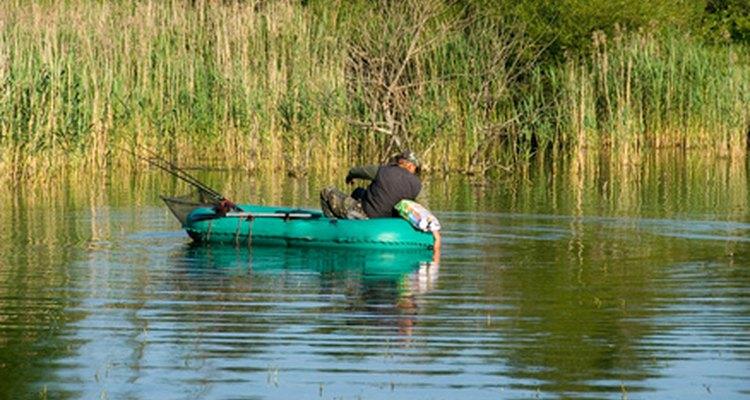 En washington también se pesca lubina.