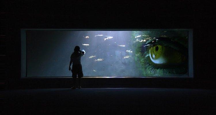 Prueba con eliminar ¼ del agua desde el acuario y sustitúyelo por agua limpia.