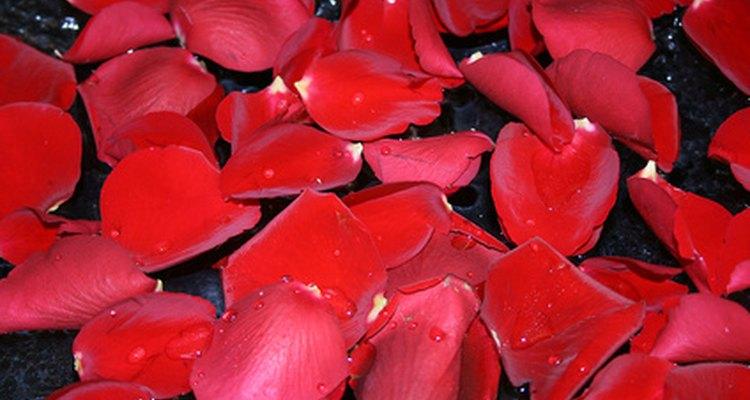 Haz tu propia agua de rosas con pétalos y agua hirviendo.