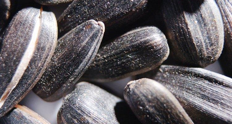 Dê a ele sementes de girassol temporariamente até que você perceba que ele consegue se virar sozinho