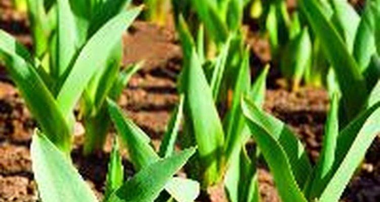 El fertilizante de urea se utiliza ampliamente en el sector de la agricultura.