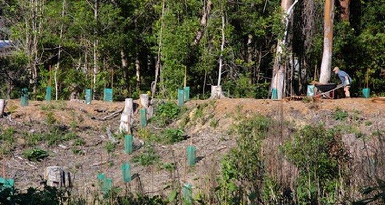 La restauración ambiental es conducida por los ingenieros ambientales.