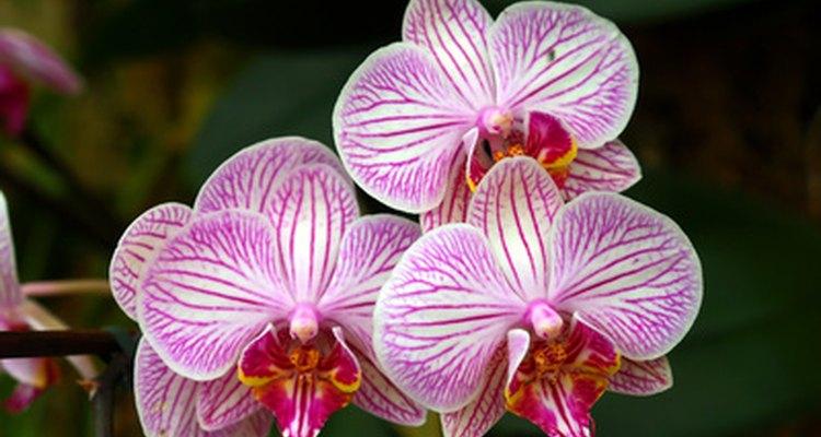 As flores da floresta amazônica desenvolveram adaptações únicas para garantir sua sobrevivência