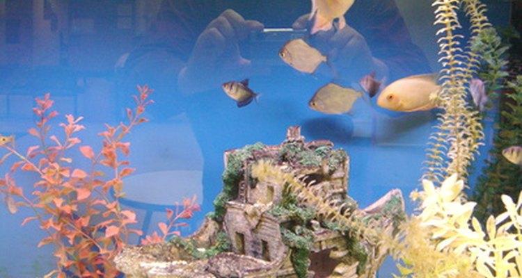 O vidro perfeitamente transparente faz com que você se sinta embaixo d'água com seu peixe