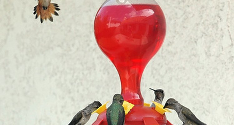 Beija-flores bebem um néctar de água doce e açúcar que pode atrair outros insetos e animais
