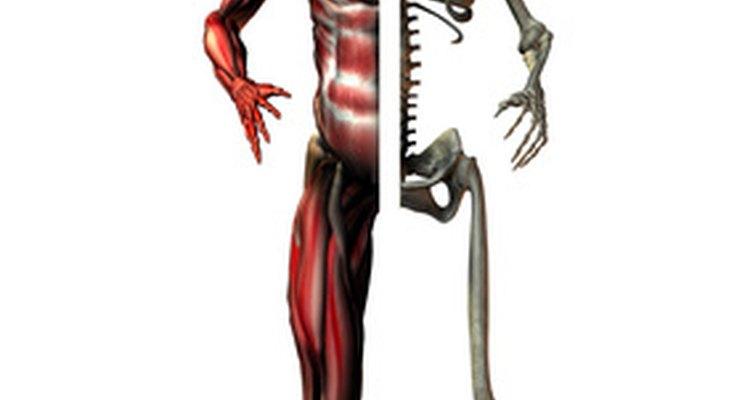 Los fisioterapeutas son médicos que ayudan a personas con problemas de movilidad, funciones musculares o funciones neurológicas.