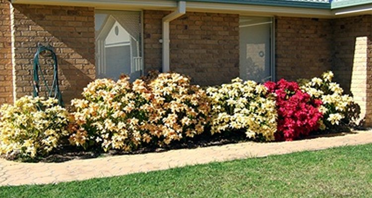 Electric hedge trimmers help to keep shrubs neatly trimmed.