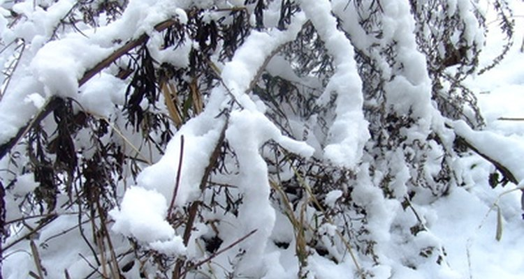 Snow storms depend on warm fronts for moisture supply.