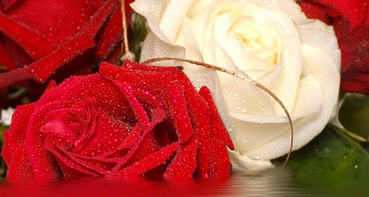 Rosas con manchas blancas.