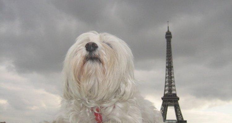 Os cães podem viver uma vida normal mesmo depois de terem um olho removido