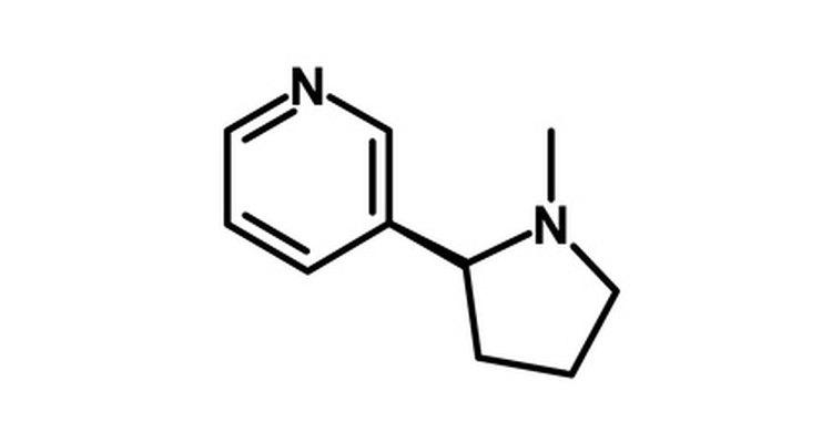 La nicotina es un alcaloide natural poderoso.