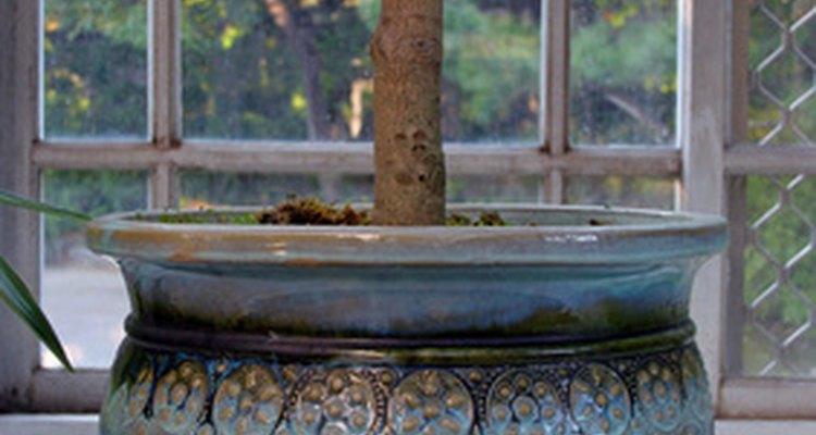 Os enchimentos ocupam espaço nos vasos para plantas