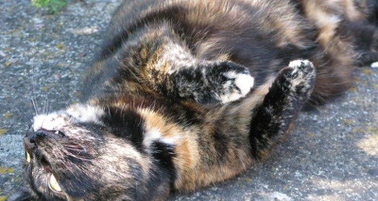 Um animal parecendo estar em sofrimento agudo necessita de tratamento profissional imediato