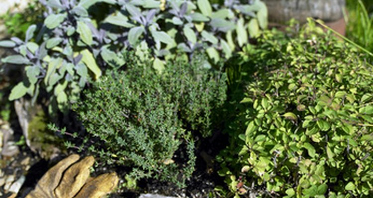 Many plants will thrive in south-facing gardens.