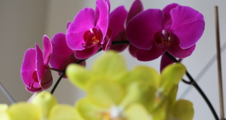 Orchids are elegant wedding flowers.