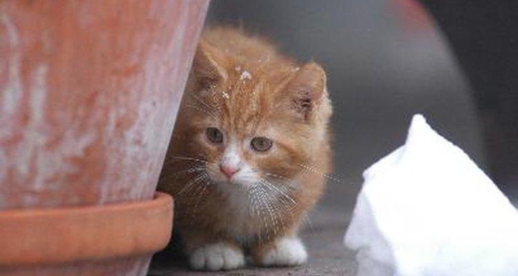 Cómo evitar que los gatos excaven las plantas de la casa.