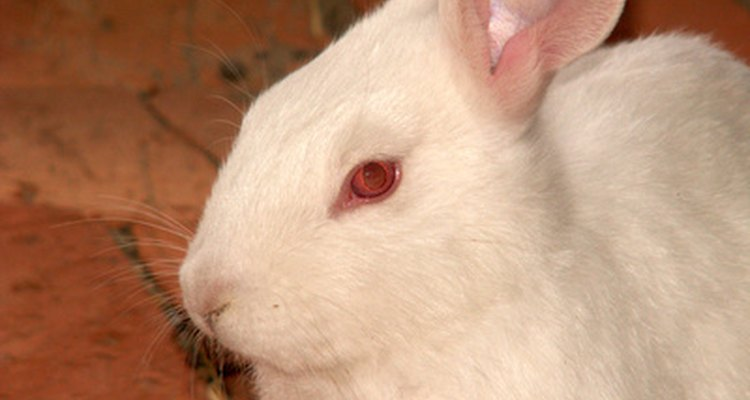 Cataracts in rabbits are fairly common.