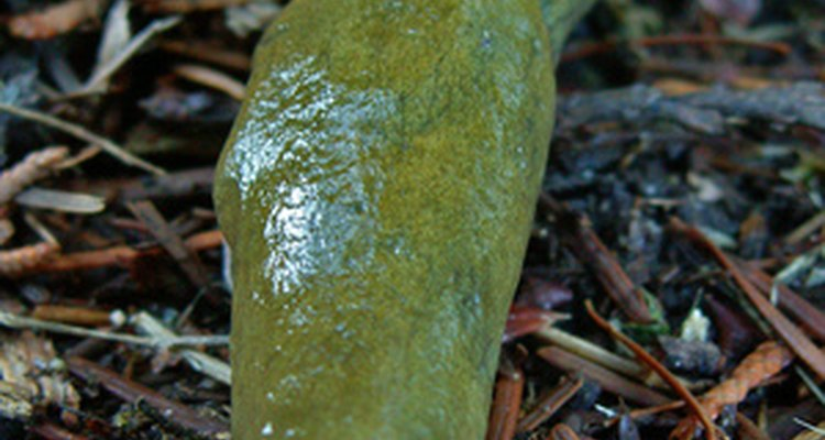 Slugs are an expensive pest for farmers worldwide.