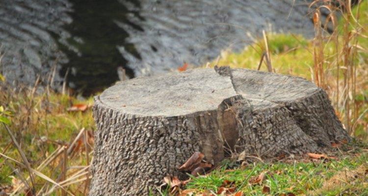 Remova  aquele velho tronco com uma variedade de métodos
