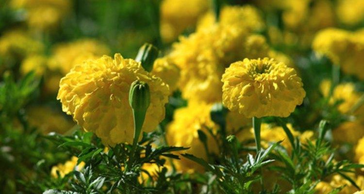 La primavera es la estación del año en que todo vuelve a vivir.