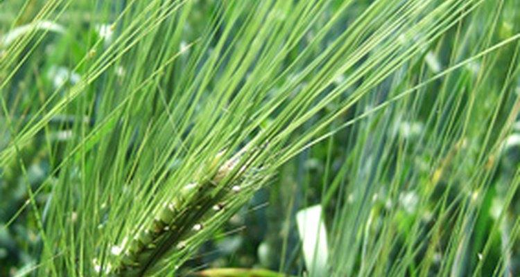 Los herbicidas orgánicos están hechos de ingredientes naturales.
