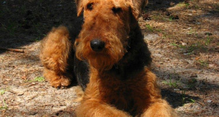 Los descongestivos de venta libre para humanos pueden servir también para aliviar los síntomas de tu perro.