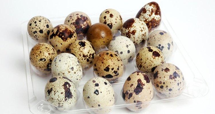 Los huevos de perdiz son uno de los tipos más simples de huevos de codorniz para empollar.