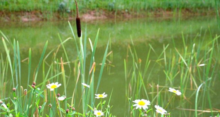 As lagoas abrigam grande biodiversidade