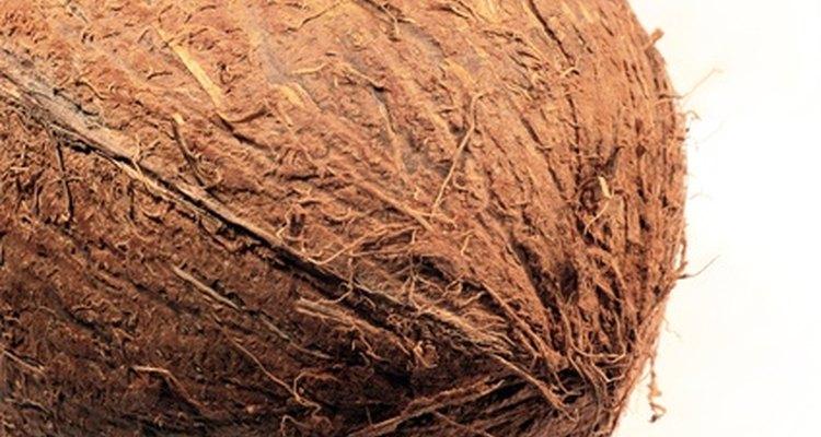 As fibras do coco bem da sua casca