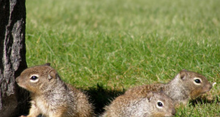 All squirrels look alike regardless of their gender.