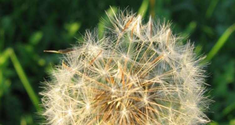 Weed and feed kills lawn weeds, but can be toxic.