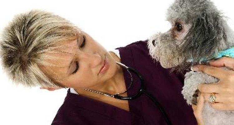 Consulta a un veterinario para recibir orientación.