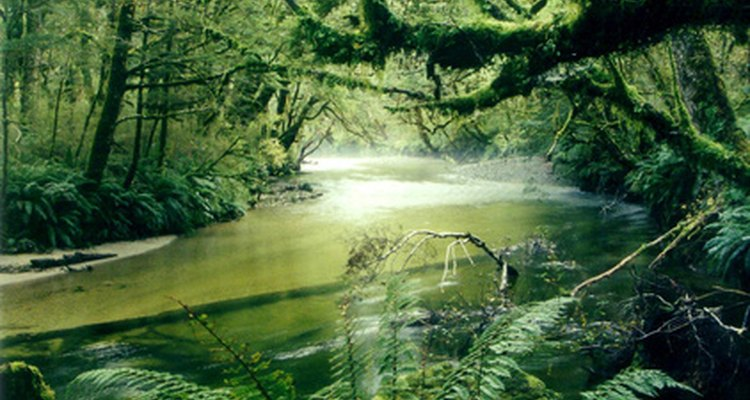 Rainforests offer an abundance of plants and food products.