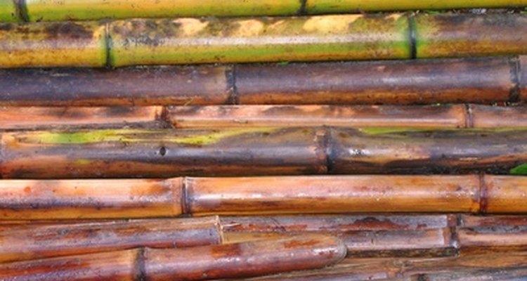 O bambu precisa estar seco, antes de concluir este projeto