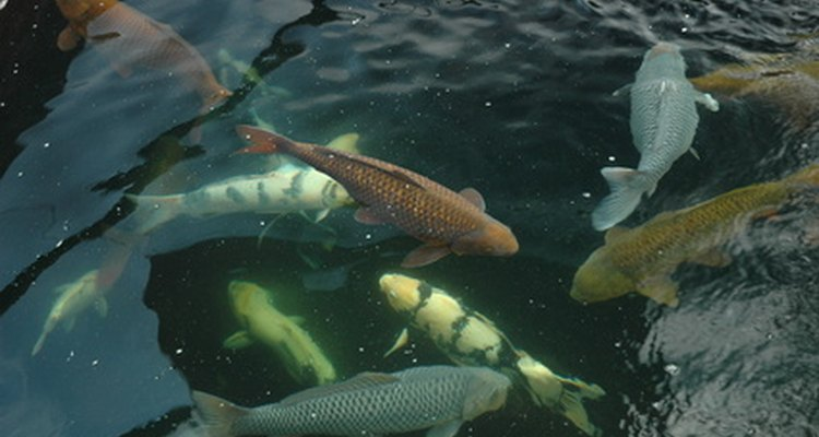 If fish will be in your pond, install an intake strainer on your pump to protect hatchlings.