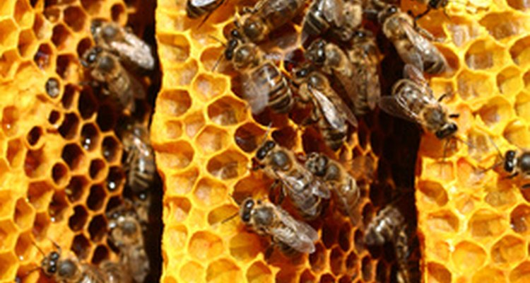 Bee use propolis to patch small gaps in their hives.