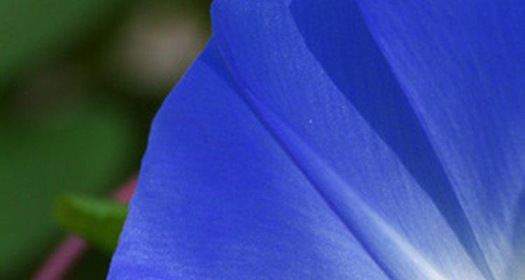 Certain flower varieties react to temperature variations.