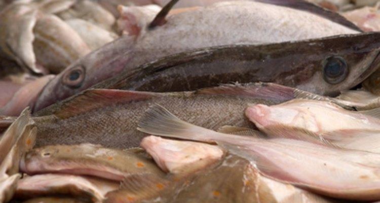 Una amplia variedad de pescado está disponible en un número de diferentes cortes.