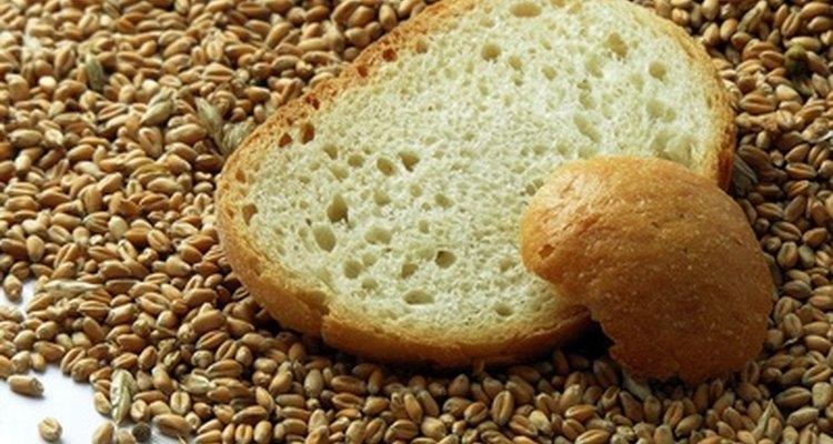 El remojo suaviza el trigo entero.