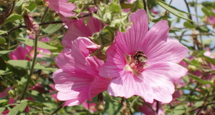 Pollen from flowers can cause the release of histamines for some people.
