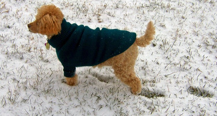 Knitted dog sweaters can keep your pet  warm in winter.
