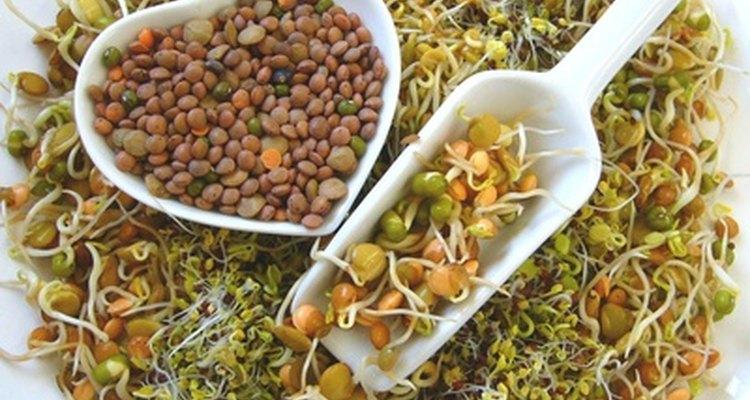 Las semillas pueden formar parte de la dieta del loro gris africano.