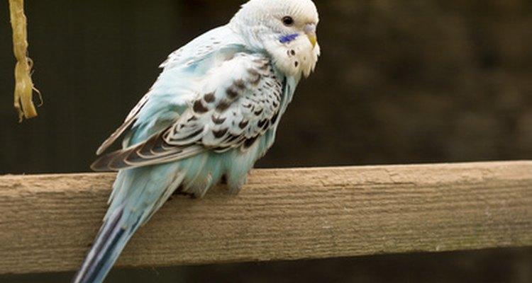 Birds have pet dander too.