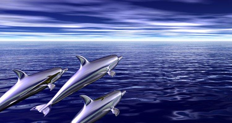 Um dos símbolos do Poseidon é o golfinho