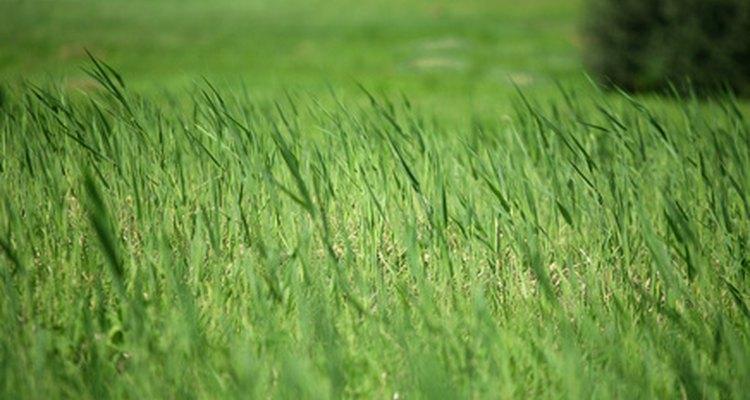 El aspersor Rain Bird serie 5000 puede ajustarse para regar varios tamaños de áreas de un jardín.