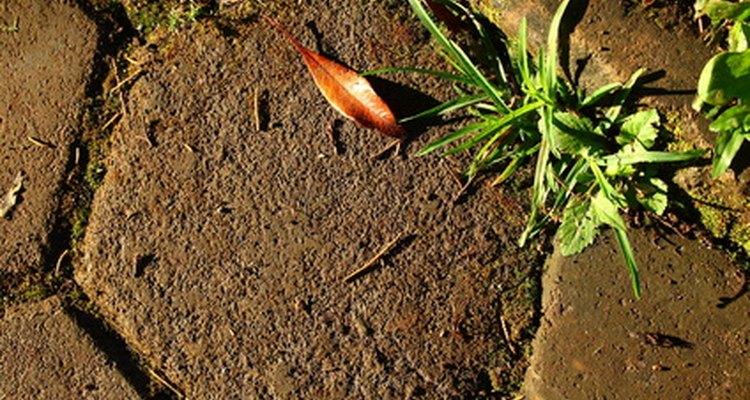 Protege tus adoquines impidiendo que las malas hierbas crezcan entre ellos.